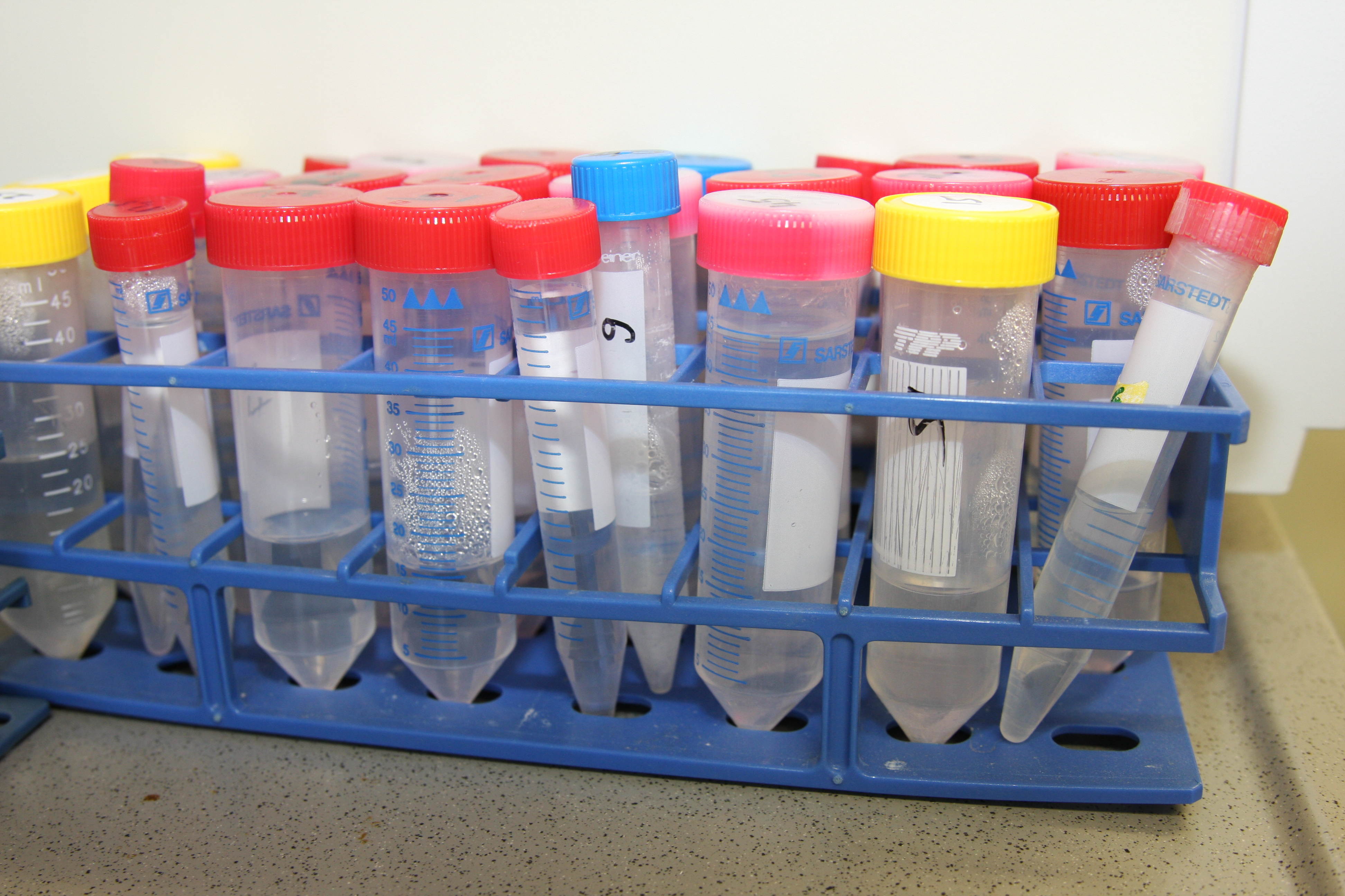 Test tube rack with various coloured tubes